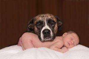 Babysitter finden Tipps