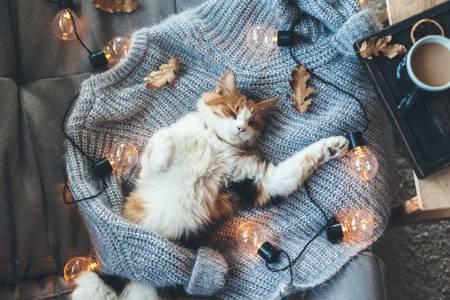 Kindgerechte Haustiere Katze