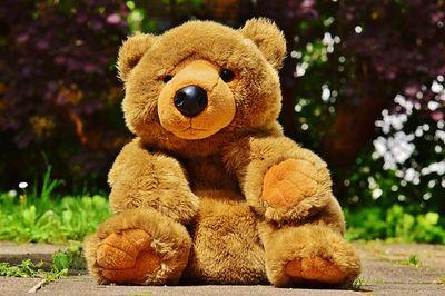 Riesen Teddy Testsieger